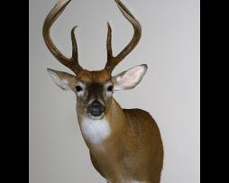 show-deer-dprice